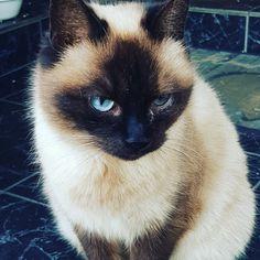 Cats, Gatos, Kitty Cats, Cat, Kitty, Cats And Kittens, Cat Breeds