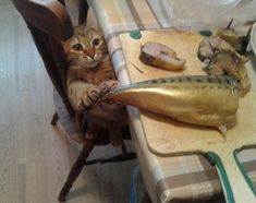 #funny #funnynimals #cats