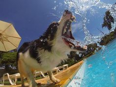 GoPro Photo. - This GoPro water still of a dog trying to eat water is awesome!