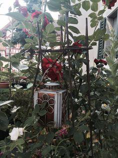 Yvonnes Garden