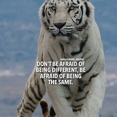 That's what got ur tongue flopping w my name on it HOE Tiger Quotes, Lion Quotes, Animal Quotes, Encouragement Quotes, Wisdom Quotes, Me Quotes, Motivational Quotes, Inspirational Quotes, Strong Quotes