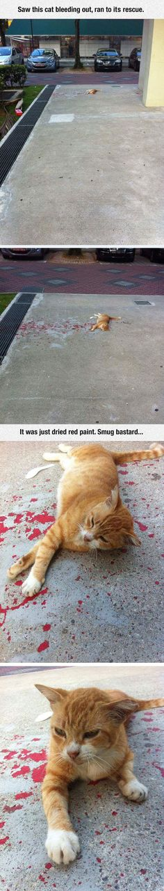 Trying To Rescue A Cat - Story has Happy Ending - Cat is OKAY, guy mistook red, dry paint for blood, was going to assist cat but realized his mistake. #Cat #Cats #Animals