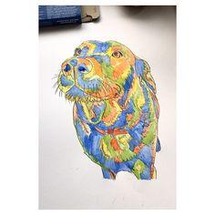 Labrador- pen and watercolour