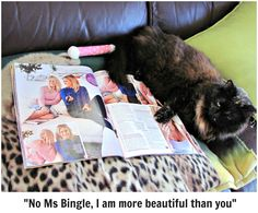 Snickers thought she`d sit on Lara Bingle ...well the magazine I was reading anyway