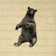 Printable Graphic Sitting Bear Download Antique Animal Image Digital Vintage Clip Art for Transfers etc HQ 300dpi No.456