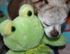 Harley and froggy