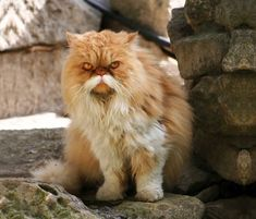 animals-with-mustache *(Should Be = Angry Animal With Mustache) ;)