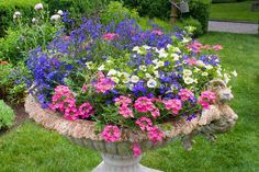 Annual container planter pot of Verbena, Lobelia erinus, Calibrachoa petunias.