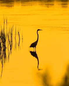 Wild Nature, Bird, Animals, Instagram, Animales, Animaux, Birds, Animal, Animais