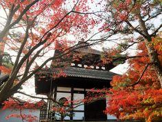 天涼秋意濃 京都不可錯過的賞楓景點6大精選@Matcha與在地人同趣的日本旅遊指南 - 旅行酒吧