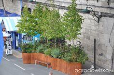 Mały ogródek, za i przed zabudową szeregową - Nicol21 - strona 108 - Forum ogrodnicze - Ogrodowisko