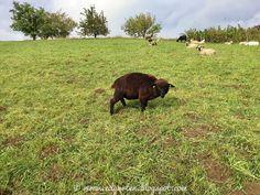 Edgarten - Gartenblog: 📷 12von12 - Was geschah am 12/10/2020? Dogs, Animals, Photo Illustration, Animales, Animaux, Animal Memes, Animal, Pet Dogs, Dog
