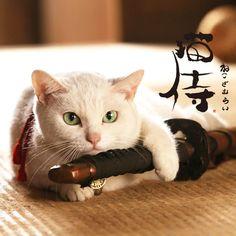 映画とドラマ「猫侍」オフィシャルブログ 昨日見た。 面白いかどうかはともかく、可愛かった。面白いかどうかはともかく。 Neko, White Cats, Black Cats, Funny Cute Cats, Cool Cats, Puppies And Kitties, Cats And Kittens, Japanese Jewelry, Animals And Pets