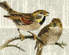 birds - two sweet vintage birds - printed on page from old dictionary