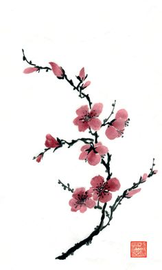 Learn Chinese Brush Painting Techniques with Pauline Cherrett. Plum, ink and watercolour. Taken from the February 2015 issue of Leisure Painter Cherry Blossom Drawing, Cherry Blossom Tattoos, Cherry Blossom Watercolor, Cherry Drawing, Cherry Blossom Images, Watercolour Flowers, Watercolour Painting, Japanese Watercolor, Japanese Painting
