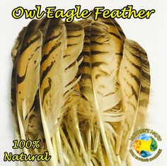 Natural Owl Eagle Feather - Pack of 5