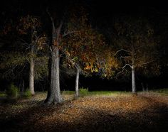 sureal landscapes | Night: Surreal Landscapes Lit with an LED Flashlight ... | Photo-Grap ...