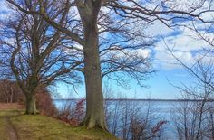 Old trees on the lakeshore. Denmark. Taken with Sony Xperia Z1 smartphone