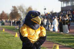 Go Falcons! Go Peddie!