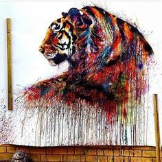 Dripping Tiger by @e.ying .   Shared by @kitslam  YouTube