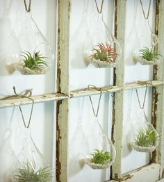 Window Frame Terrarium - 6-Pane | Home Decor | Roots in Rust | Scoutmob Shoppe | Product Detail