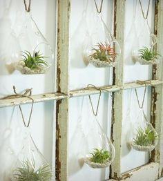 Window Frame Terrarium - 6-Pane