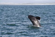 Less than 20 minutes from Cape Town lies the start of the Cape Whale Route, South Africa.