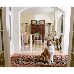 83 Best Dog Rooms Inside House Images Pets Dog Cat Doggies
