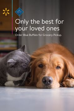 Shop Walmart's selection online anytime, anywhere. You can use the Walmart Grocery App and start shopping now. Odd Animal Couples, Cute Puppies, Cute Dogs, Animals And Pets, Cute Animals, Bubbline, Pet Food, Cute Animal Pictures, Pet Memorials