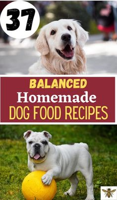 """Making your own dog food is not only economical but many times healthier for our dogs! Check out """"37 Balanced Homemade Dog Food Recipes""""! Make Dog Food, Best Dog Food, Survival Tips, Homestead Survival, Dog Food Recall, Dog Eating, Hobby Farms, Sustainable Living"""