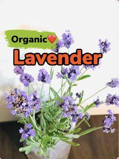 Growing Plants Indoors, Herbs Indoors, Growing Herbs, Growing Vegetables, Honeydew Plant, Cucumber Plant, Buy Flowers Online, Buy Plants Online, Organic Herbs
