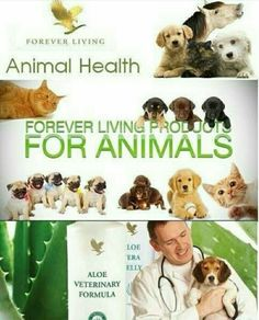 Treat your pets to some of our Aloe and keep them feeling healthy :) Http://teamphoenix.flp.com