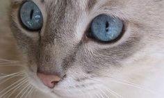 De quel chat suis-je la réincarnation ?