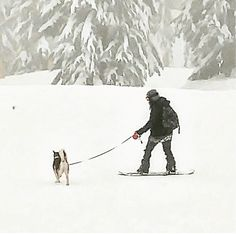 Snowboarding with my man OG Red Siberian Husky, A Husky, My Man, Snowboarding, Mount Everest, Adventure, Holiday, Animals, Outdoor