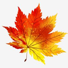 Fall Leaves Background, Paint Background, Background Patterns, Leaf Clipart, Clipart Images, Hand Clipart, Autum Leaves, Maple Leaves, Maple Leaf Drawing