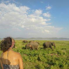 Elephant at Kaudulla National Park - Sri Lanka Itinerary