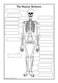 science - the human skeleton | stuff for class | pinterest | the o, Skeleton