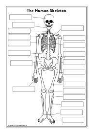 Human skeleton labelling sheets