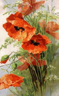 We are professional Catherine klein supplier and manufacturer in China.We can produce Catherine klein according to your requirements.More types of Catherine klein wanted,please contact us right now! Art Floral, Watercolor Flowers, Watercolor Paintings, Watercolours, Catherine Klein, Orange Poppy, Red Poppies, Poppies Art, Botanical Art
