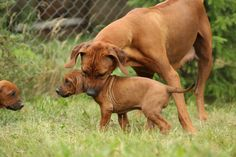 Top 15 Dog Breeds For Home Protection