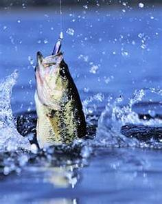 seeing the bass hit that top water