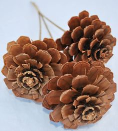 Pine Cone Roses Pine Cones Home Decor Stemmed Pine ConesOur pine cone roses are one of our favorite products. They are pine cones trimmed to be in the shape of roses.Coffee Grinder Replacement PartsShipping Wine To Maryland Nature Crafts, Fall Crafts, Diy And Crafts, Christmas Crafts, Christmas Ornaments, Beach Crafts, Summer Crafts, Kid Crafts, Craft Projects