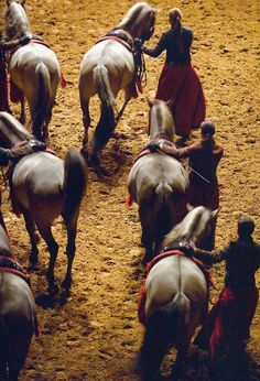 Beautiful angle on this photo of women leading horses. Extravaganza Horse Shows & Performances Learn about #HorseHealth #HorseColic www.loveyour.horse