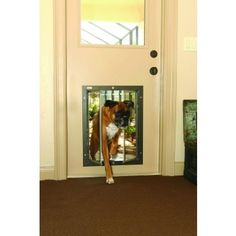 Choosing The Right Dog Door