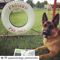Una nuova attività si è iscritta su #BauSocial: Passion for Dogs . . #Repost @passionfordogs_centrocinofilo with @repostapp  #passionfordogs #germanshepard #pastoretedesco #bologna #cane #cani #dog #dogs #emilia #emiliaromagna #italia #love #life #instadog #Bau #dogstagram #puppy #tbt #marketing #centrocinofilo #dogsitter #toelettatura #petshop