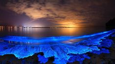 bioluminescence in Jervis Bay Australia. Most Beautiful Beaches, Beautiful Places, Amazing Places, Jervis Bay Australia, Light Trails, Natural Phenomena, Nature Images, Night Skies, Nature