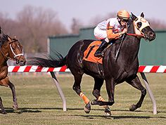 Hall of Fame trainer King Leatherbury reported Thursday that his 9-year-old multiple graded stakes winner Ben's Cat will get the winter off following his seventh-place finish Nov. 24 in the Fabulous Strike Handicap. 12/10/15