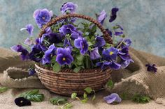 images of still life paintings with violets  | The Pansy Violets | Flickr - Photo Sharing!