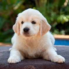 Puppy Training Package - http://www.dog-ramblers.co.uk/puppy-training-package/