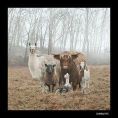 Les animaux de la ferme prennent la pose pour Rob MacInnis.